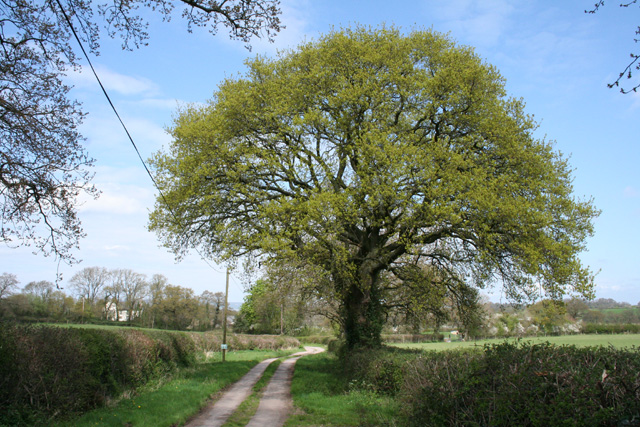 West Buckland: the way to Buckland Farm