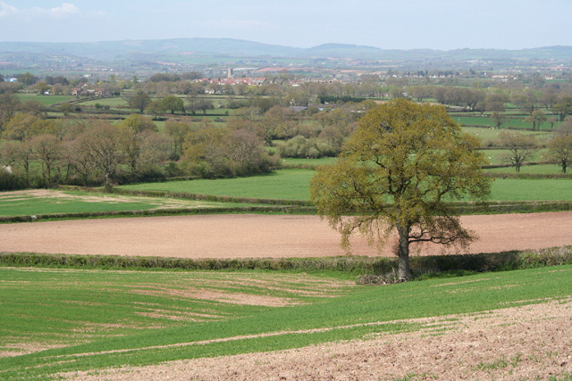 Pitminster: near Chelmsine