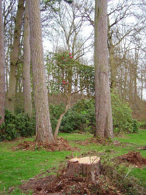 Dundock Wood