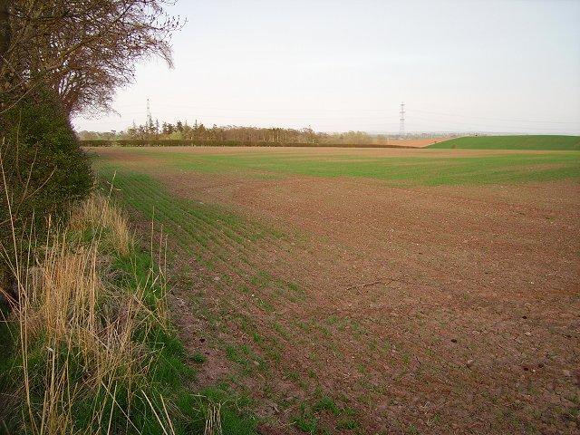 Spring crops, Mount Pleasant
