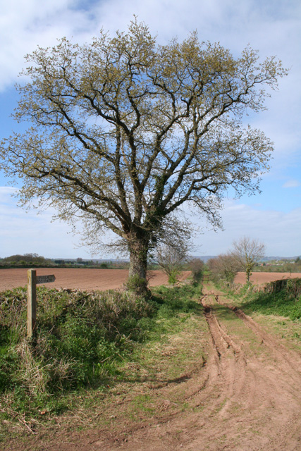 Milverton: footpath and track to Blagrove's Farm