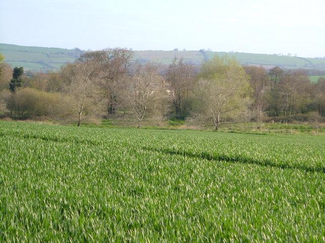 View near Nettacott