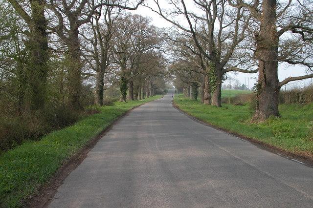 Oak Trees, Green Crize