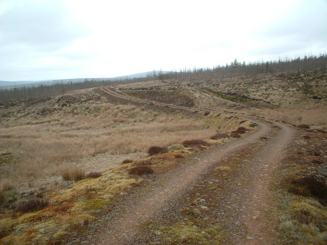 Forest road crossing Cove Burn