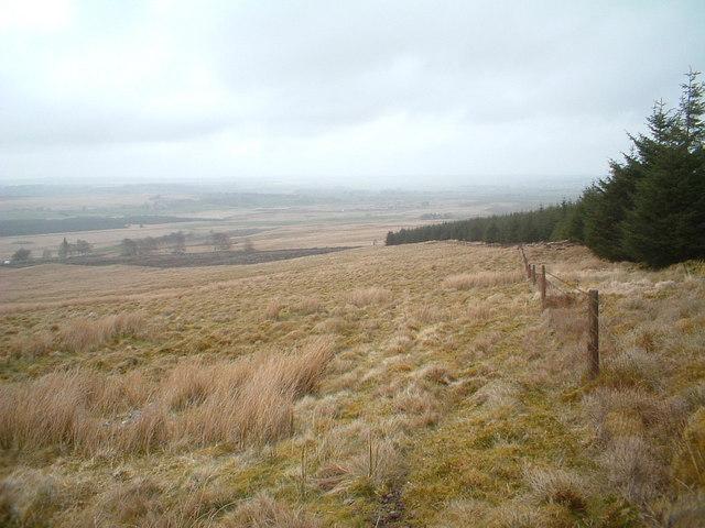 Felled forest on Greystone Hill