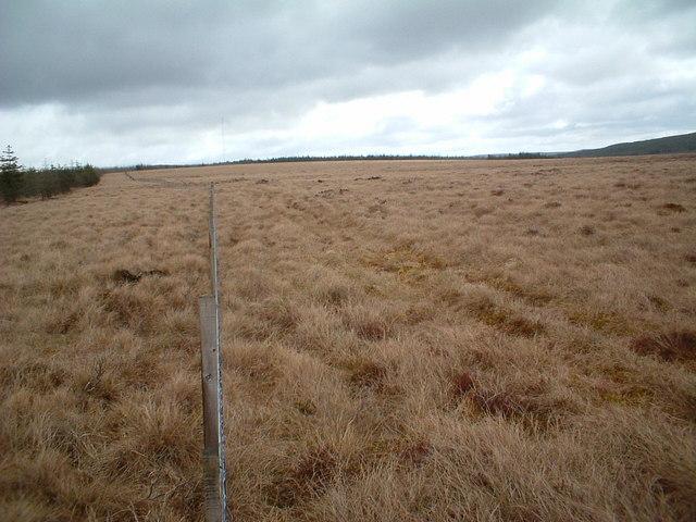 Forest fence on Bankend Rig