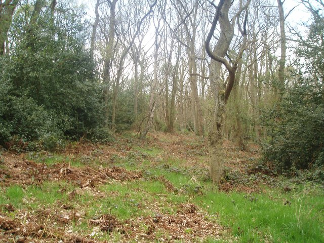 Priestclose Woods