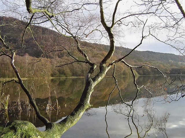 Overhanging Tree on Lake Gormire