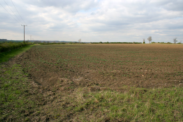 Field to the north of Bridegate Lane