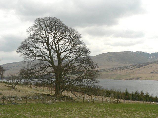 Pasture above Loch Freuchie