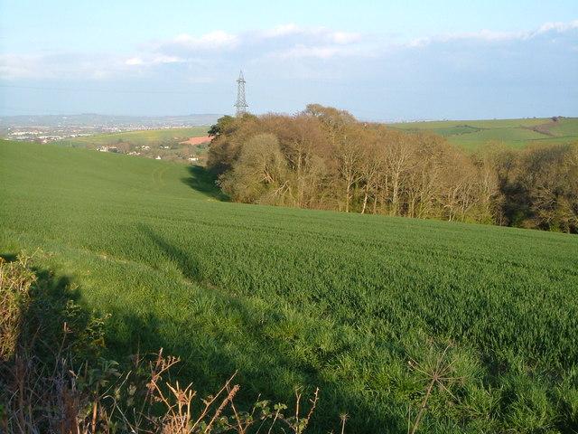 Seven Acre Plantation from Longdown Road