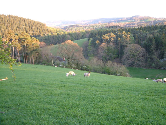 Haldon Hills at Darnaford