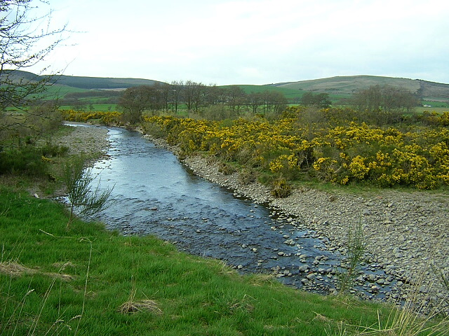 Water of Ae with Gorse in Bloom