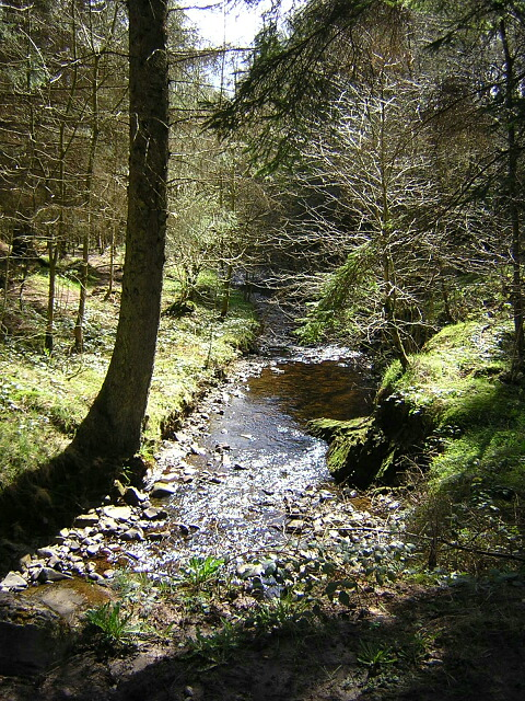 Windyhill Burn, Forest of Ae