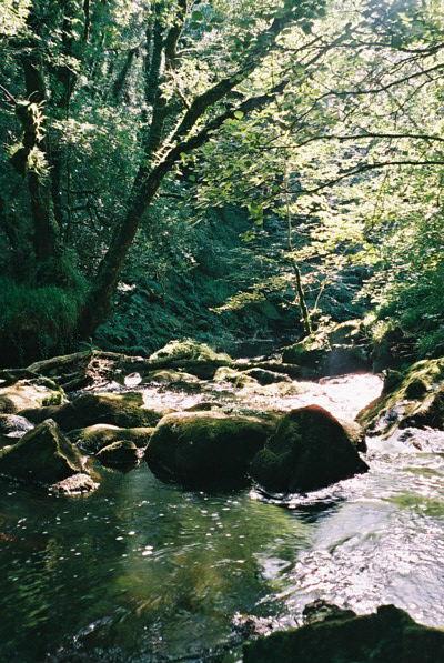 Golitha Falls August 2005