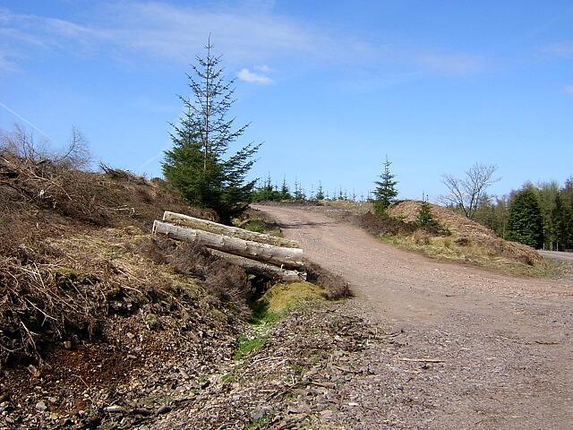 Trackside Log Pile in Auchencairn Forest