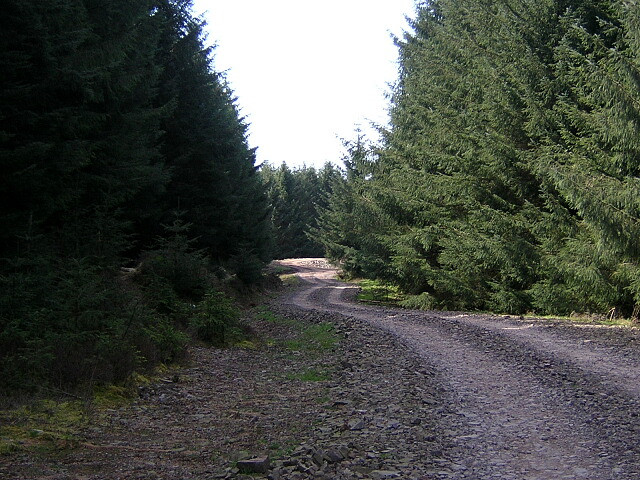 Forest Track Near Watchman Hill