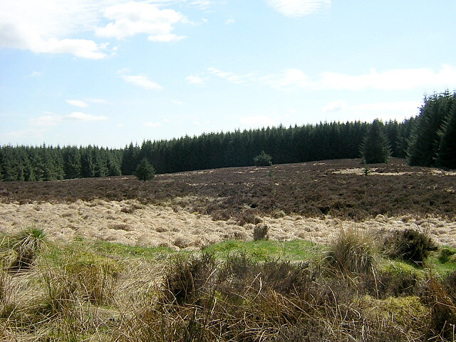 Clearing in Auchencairn Forest