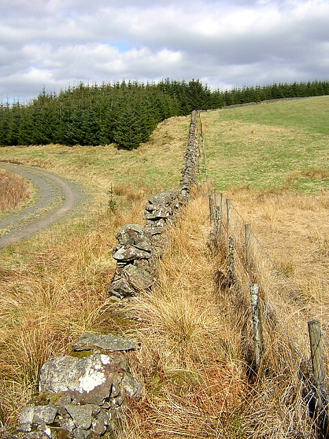 Stone Wall in Forest of Ae