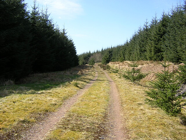 Track in Ettrick Hill Forest