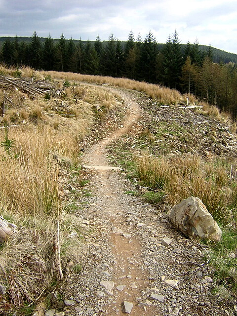 Cycle Trail in Forest of Ae