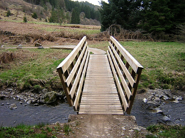 Cycle Bridge in Forest of Ae