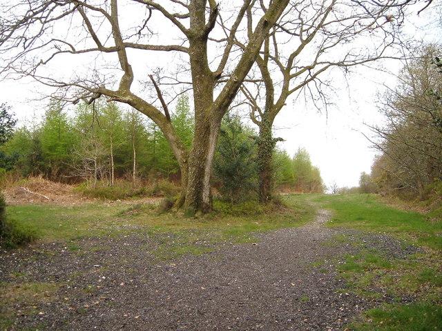 Crossroads of tracks on Haldon