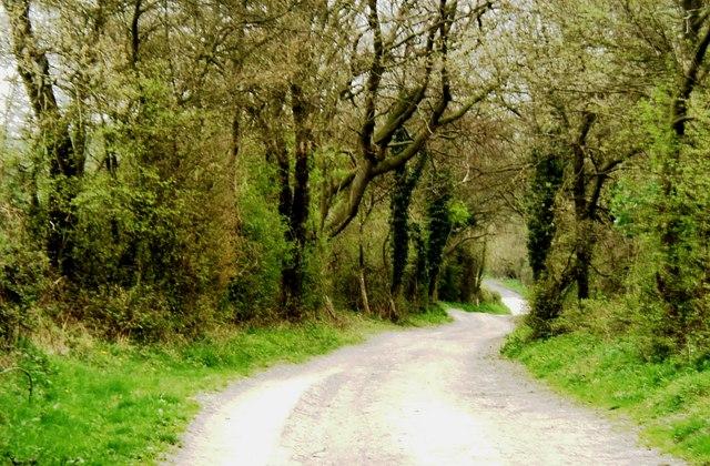 South Downs Way, near South Harting