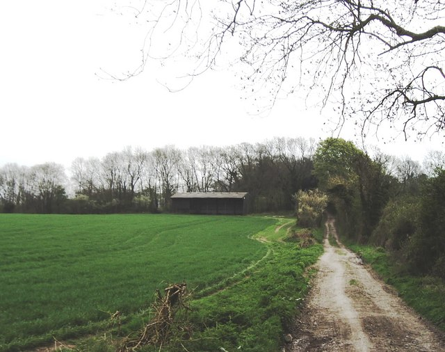 Forty Acre Lane, near South Harting