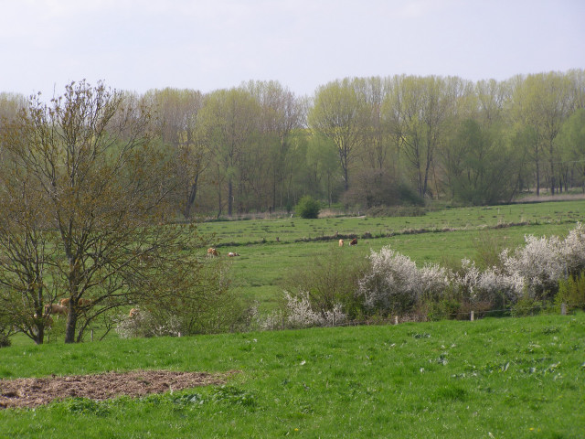 Avon valley floodplain north of Downton
