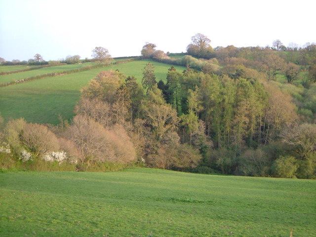 View near Trillow