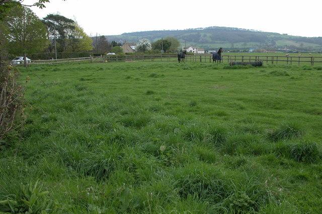 Gretton Fields