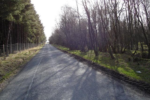 Woodland near Shielhill Bridge and Memus