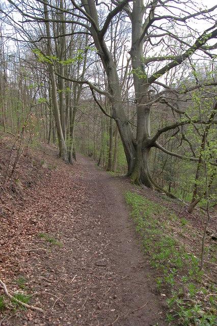 Footpath through Breakheart Plantation