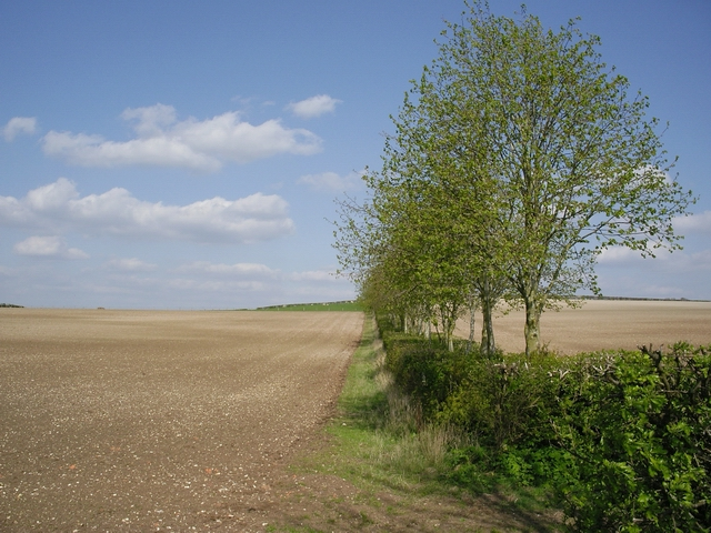 Fields and hedge on Cocum Farm