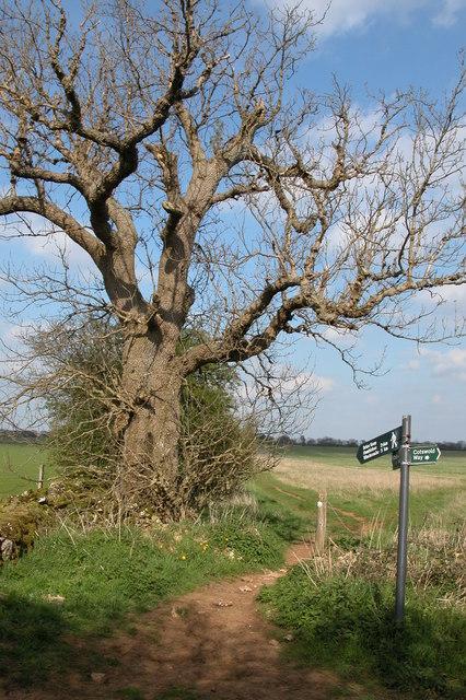 The Cotswold Way near Belas Knap