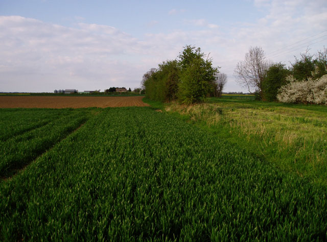Farmland near Punch Farm, Landbeach