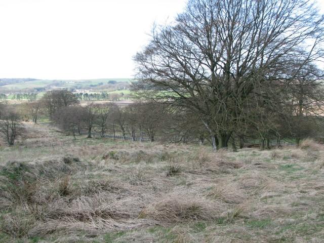 Falla Wood