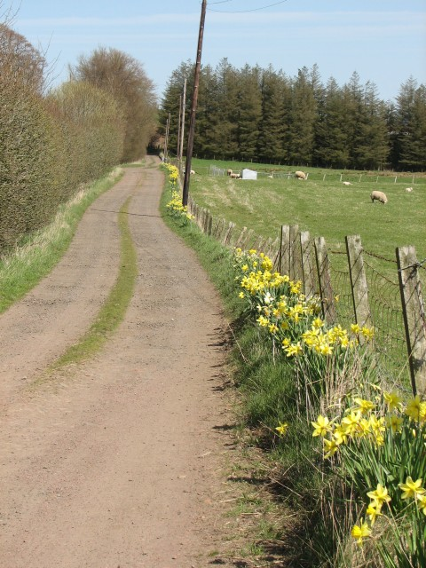 Boghall track