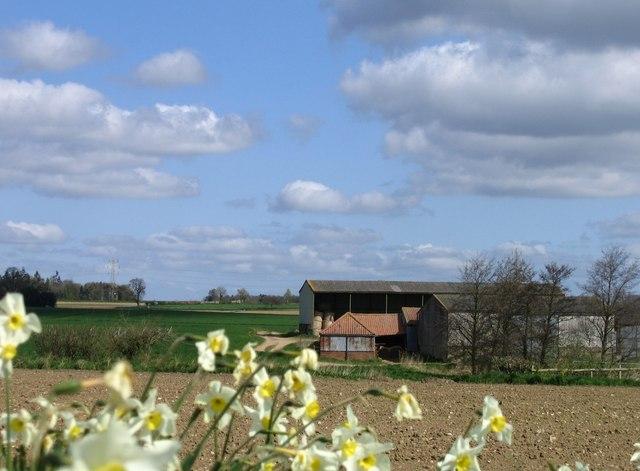 Mere Farm, Bergh Apton
