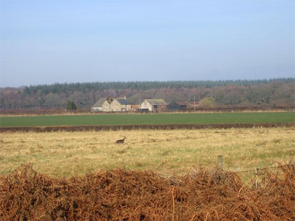 Lower Woodbury Farm near Bloxworth