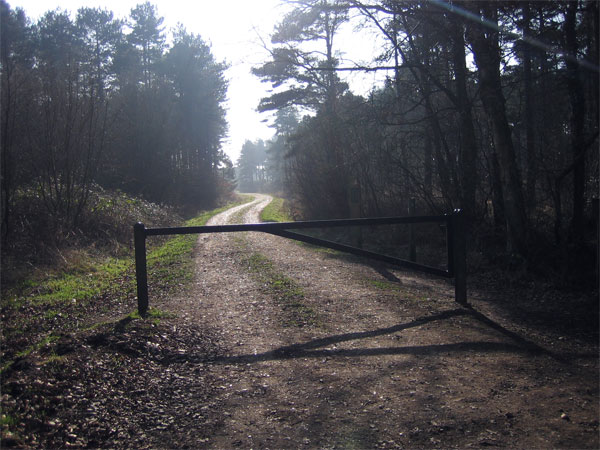 Track leading to Bere Heath