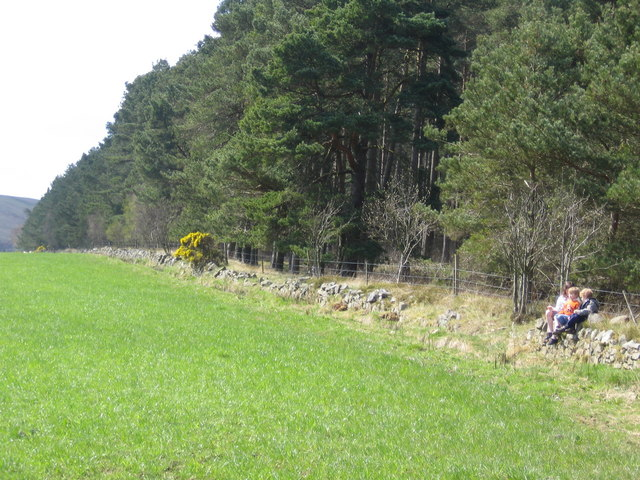 Field Boundary and Forest