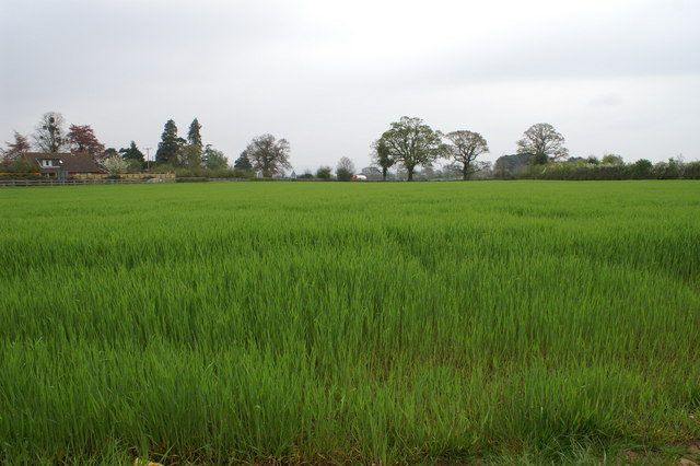 Field of crops looking to A38