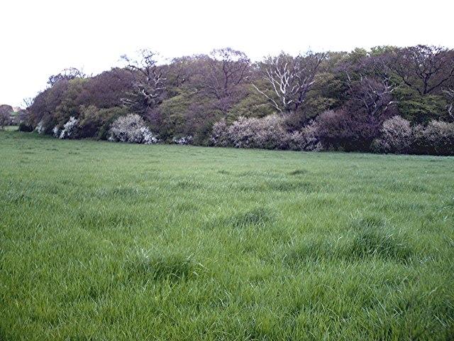 Rawreth Hall Woods - Western edge