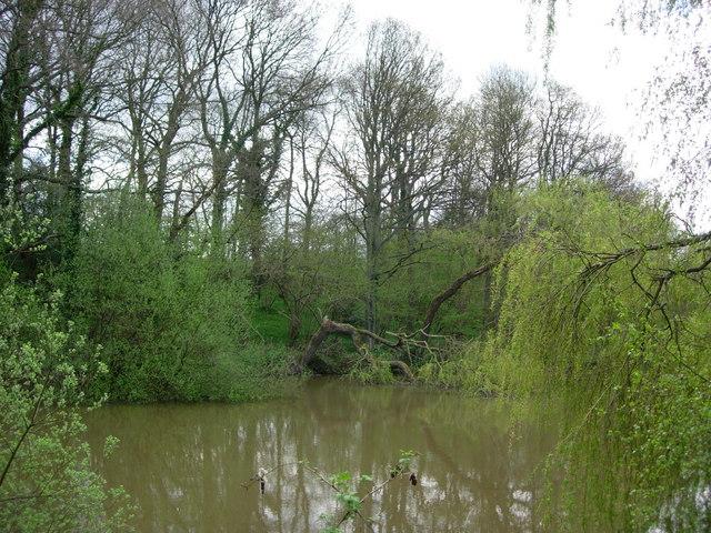 A Pond in Parrock Lane, Upper Hartfield