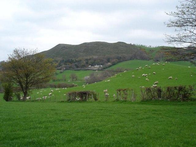 Green fields near Mynydd Bodran