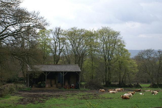 Nice Barn Nice Cows