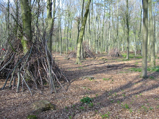 Dens or shelters in Micheldever Wood Hampshire