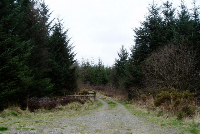 Clocaenog Forest road
